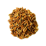 rice_seeds.png