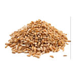 wheat_seed.png